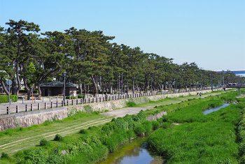 松並木と芦屋川