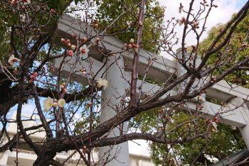 阿保天神社の梅