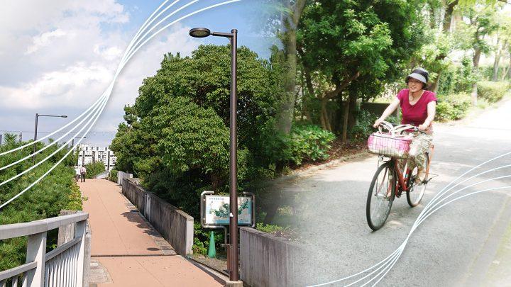 家族でのんびり、芦屋浜の中央緑道で緑の中をサイクリング!