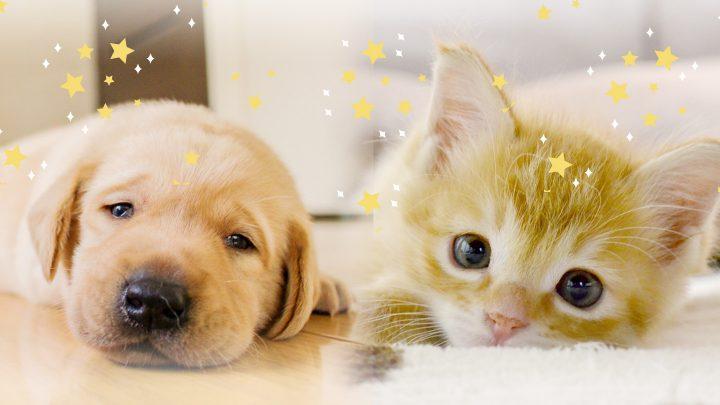 ペットを飼っている方、飼いたいと思われている方へ<br>愛するべき家族が増えるということ